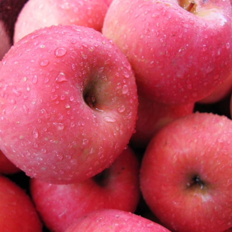 苏子富春 红富士苹果 净重9斤