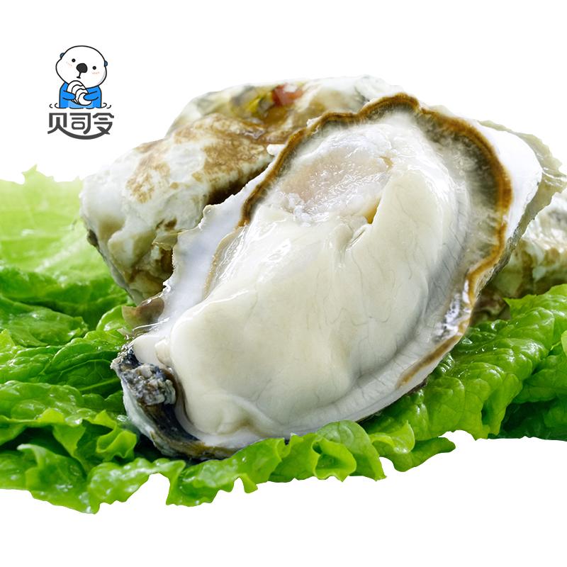 乳山生蚝鲜活5斤贝司令海鲜水产海蛎子贝壳新鲜牡蛎带壳10斤特大