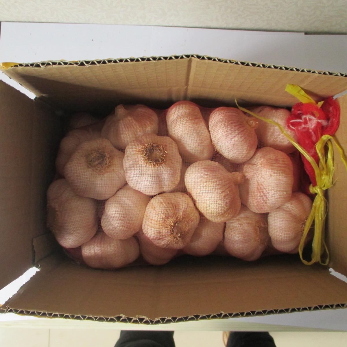 河南农家自种5斤带箱大蒜头2020年紫皮大蒜新鲜干蒜【图2】