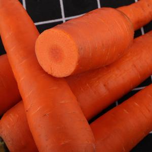 胡萝卜现挖带泥应季新鲜蔬菜生吃甜脆察右中旗红萝卜农家自种 5斤