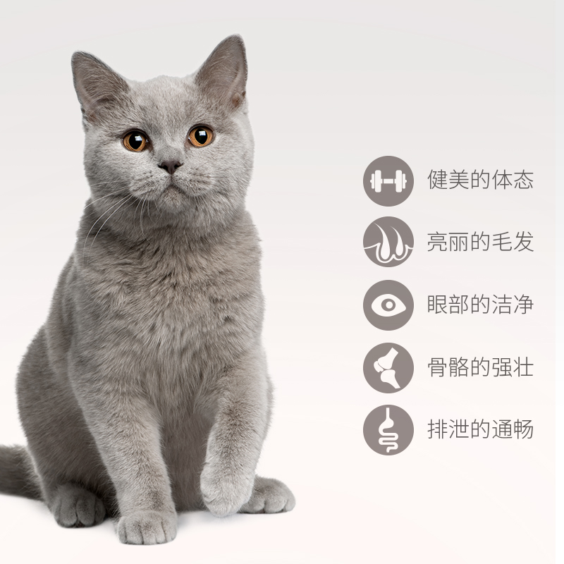 Seafood flavour cat food (full period) 500g*20    海鲜味猫粮优惠券