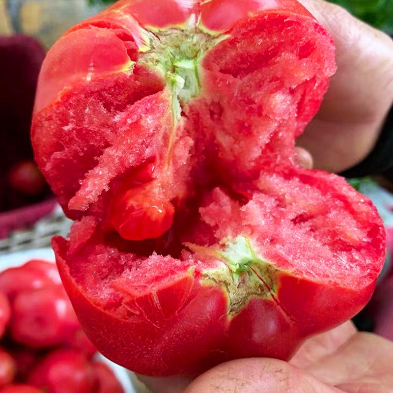 普罗旺斯西红柿新鲜蔬菜当季生吃水果自然熟助农沙瓤大番茄10整箱