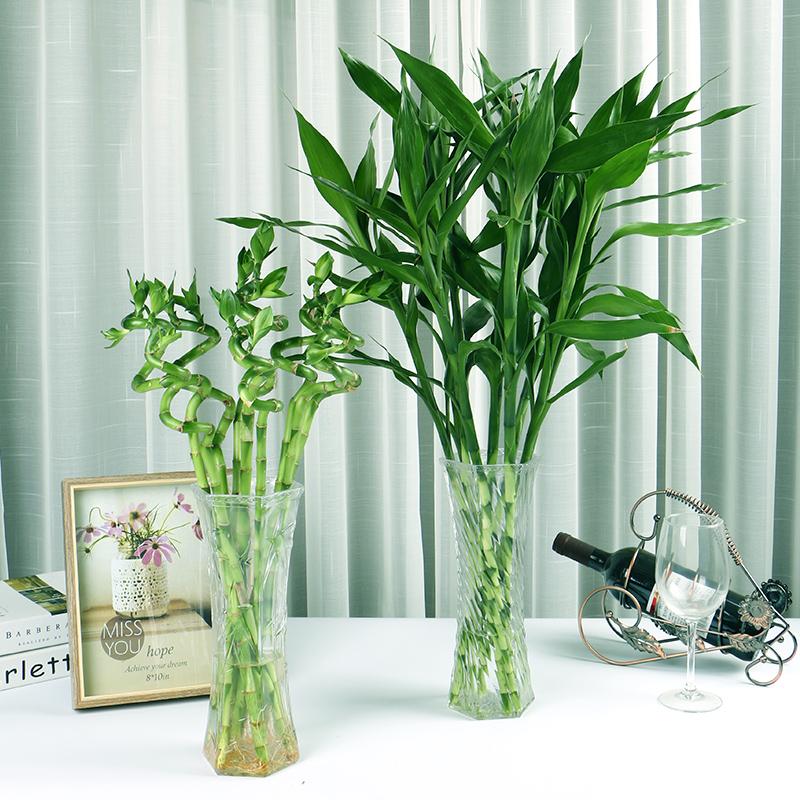 水培植物富贵竹6棵