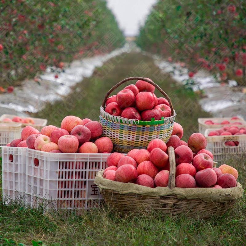 【六斤装】陕西红富士白水苹果