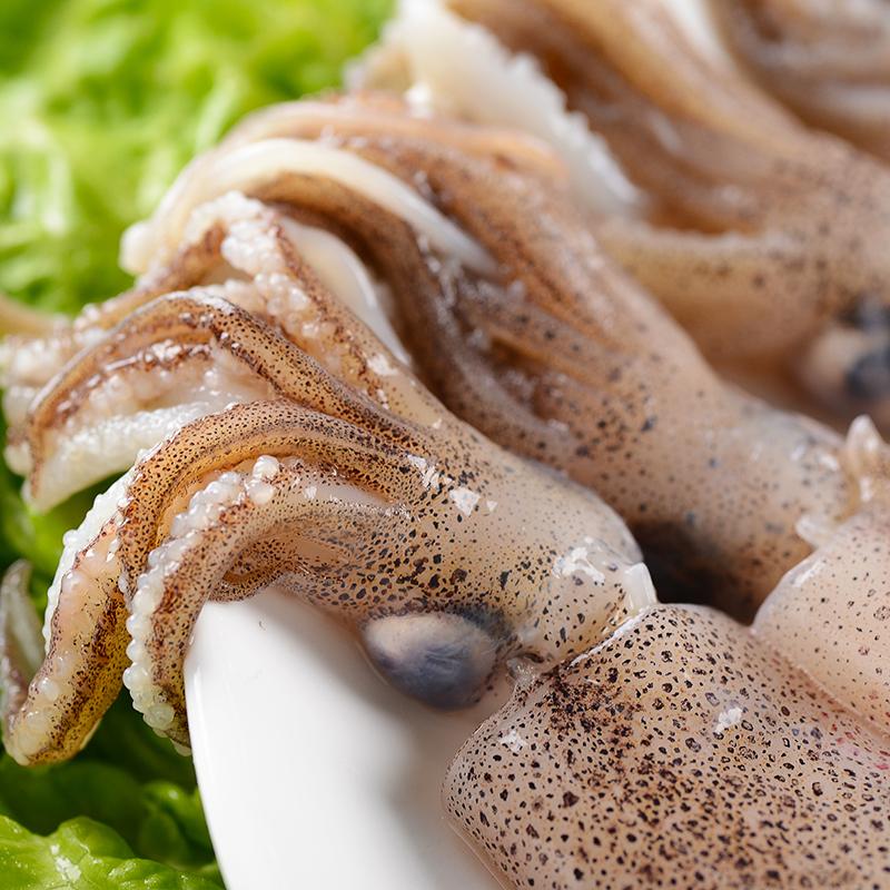 烟台新鲜海鲜 生鲜 笔管鱼 海兔鱼 乌贼 墨斗鱼 鱿鱼火锅 小鱿鱼
