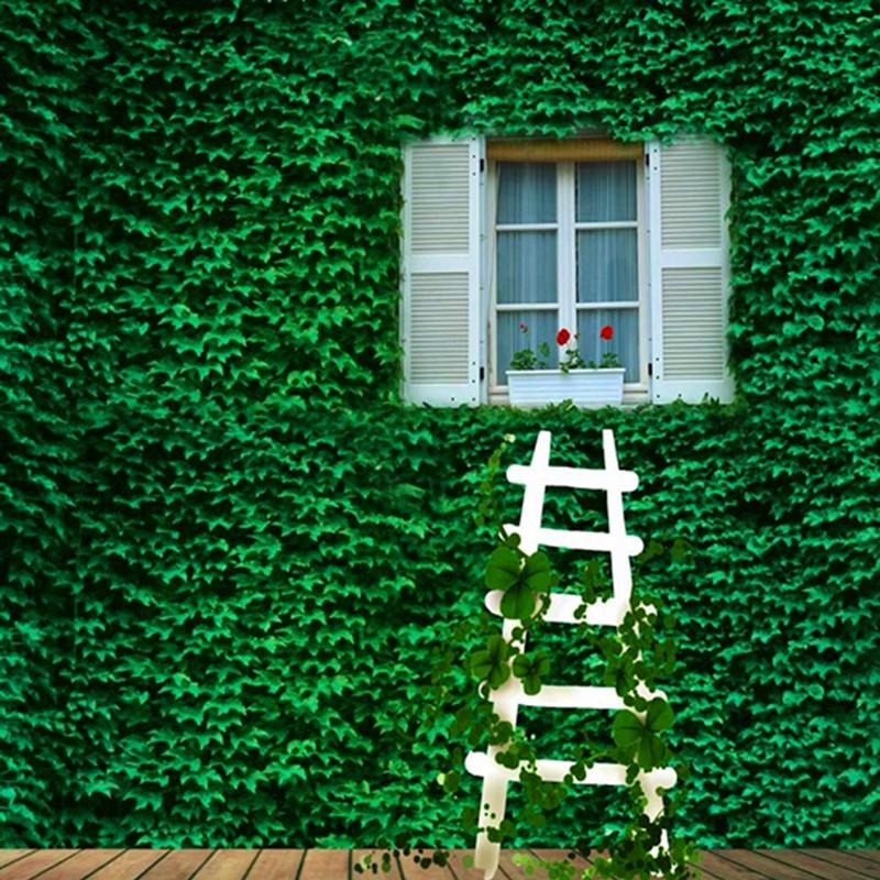 爬山虎苗爬藤植物三叶五叶红色建元爬山虎室内庭院攀爬爬