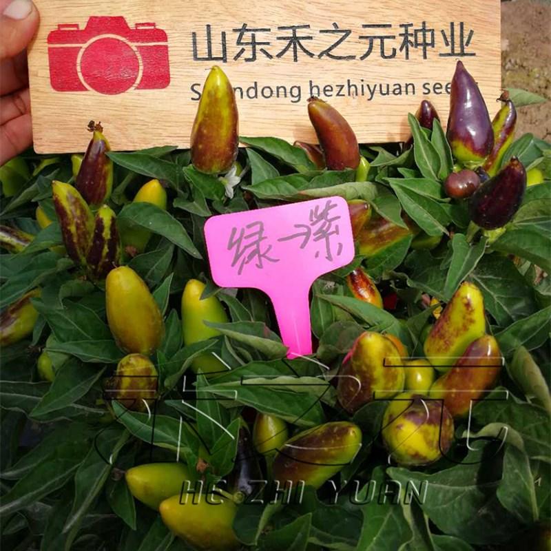 奇特的变色椒种子多彩朝天椒色春夏秋盆栽辣椒种籽蔬菜种