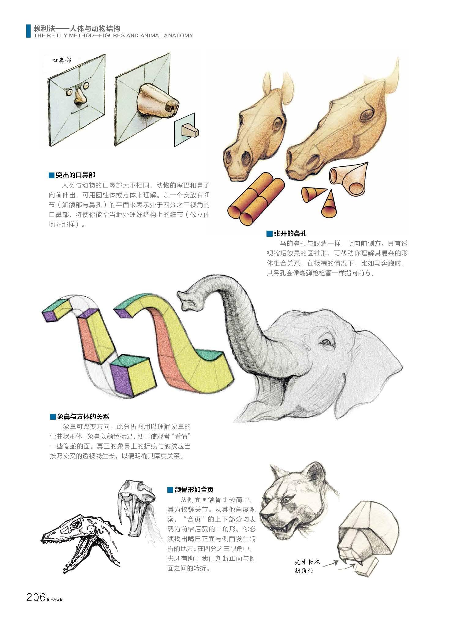賴利法人體與動物結構 貴哥全新譯作運動中的人體動物結構骨骼肌肉解剖人體畫創作臨摹教材人體動物結構繪畫素描技法教學基礎教程