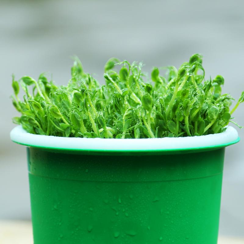 生豆芽罐盆家用发豆芽机种植桶自制苗菜麦饭石绿豆黄豆全自动神器