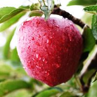 【酷秦】产地直发香甜礼县苹果红蛇果12个精品礼盒大果包邮 (¥168)