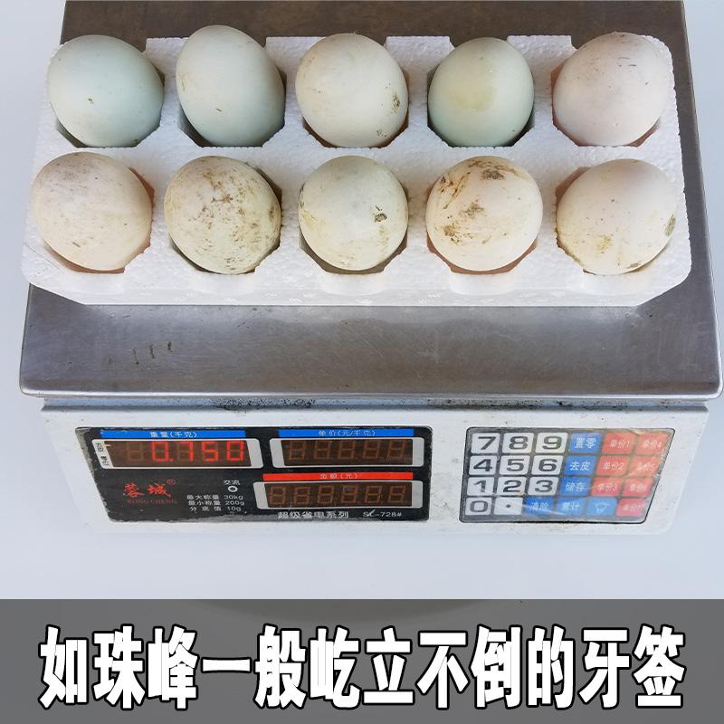 正宗新鲜土鸭蛋 农家散养鸭蛋 天然野生养殖白青壳野鸭蛋30枚包
