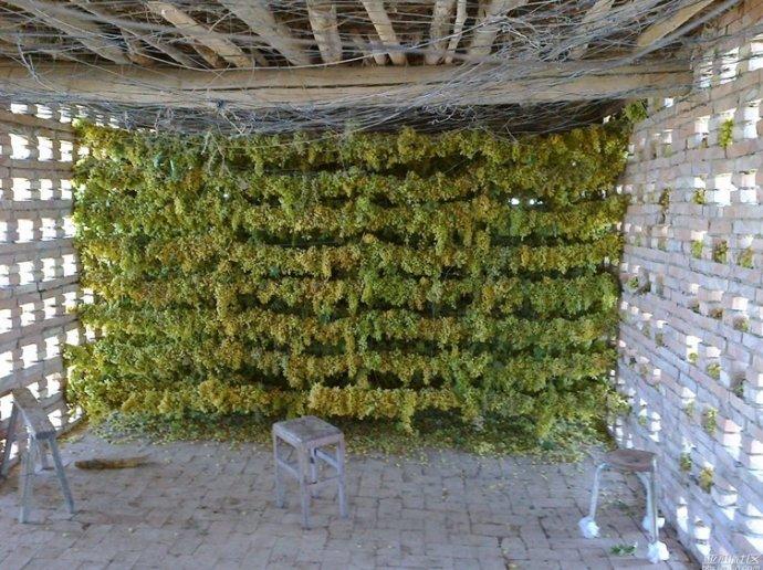 斤批 20 斤包邮 5 袋装 500g 天然食用农产品新疆无籽葡萄干特产热销