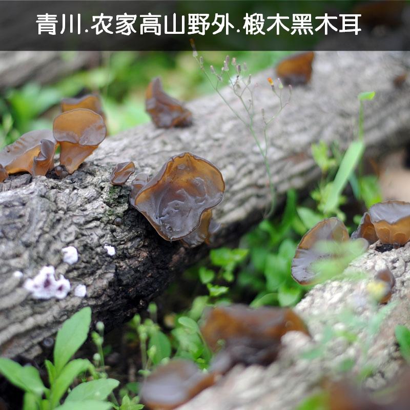 天然青冈高山椴木黑木耳青川出品 食用菌 农家土特产干货单250克高清大图