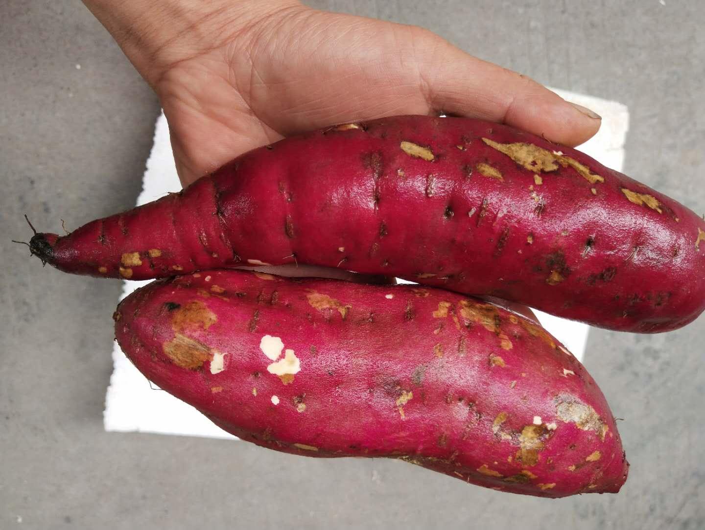 临安天目山小香薯5斤大号新鲜黄心红薯番薯甘薯地瓜糯甜山芋包邮