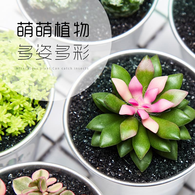 多肉组合仙人掌盆栽仙人球植物室内摆件桌面绿植仙人掌类植物盆栽