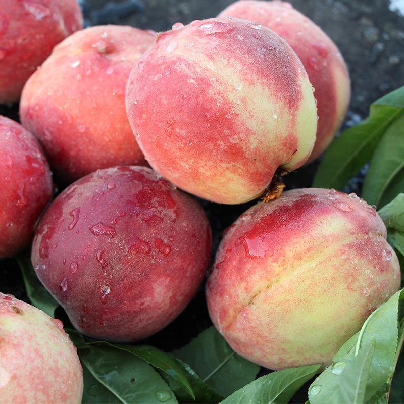 现摘现货新鲜毛桃当季桃子应季脆桃孕妇时令水果整箱2.5斤包邮