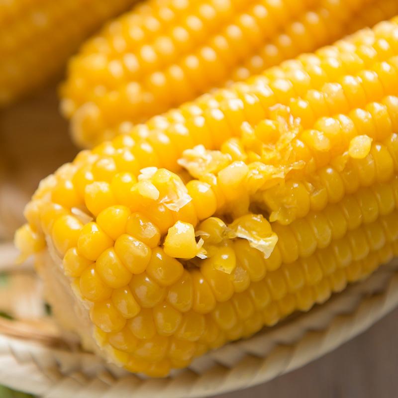 黄玉米10根*220G 新鲜甜糯玉米棒子营养早餐粗粮粘糯玉米真空袋装