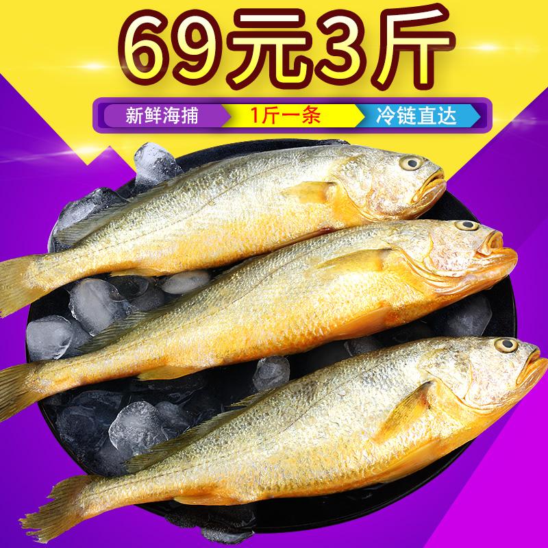 黄花鱼深海鱼类海鱼新鲜冷冻海鲜水产鲜活生鲜大黄鱼海捕