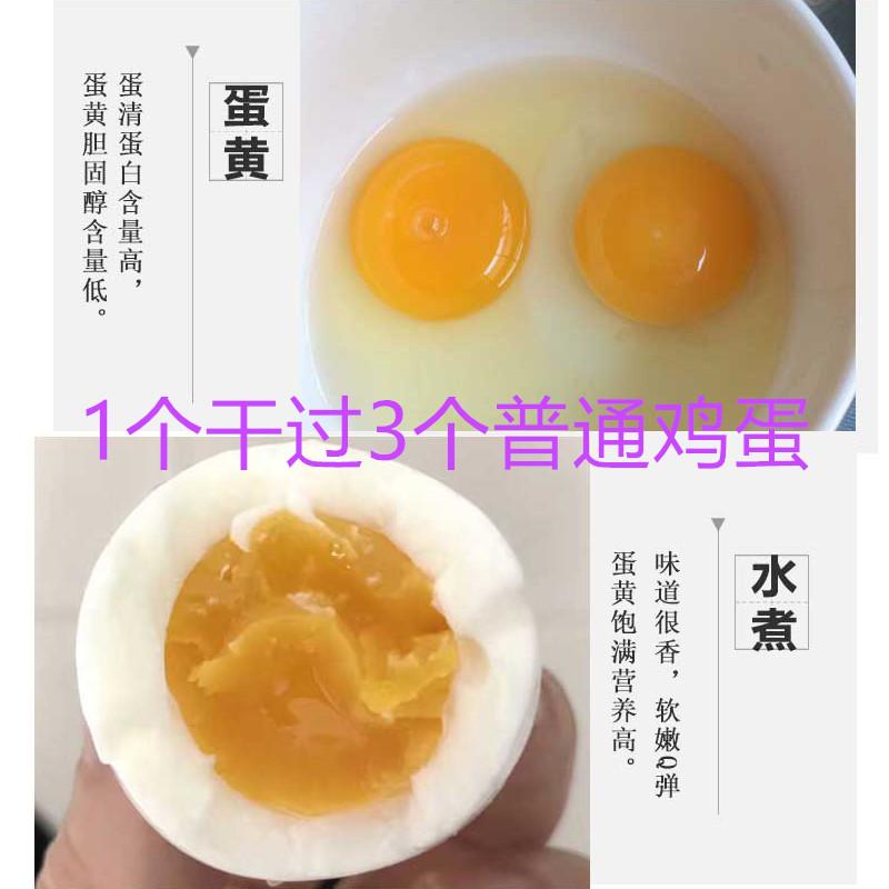 野鸡蛋60枚 七彩野山鸡蛋新鲜 散养包邮 笨柴鸡蛋 土鸡蛋 山鸡蛋