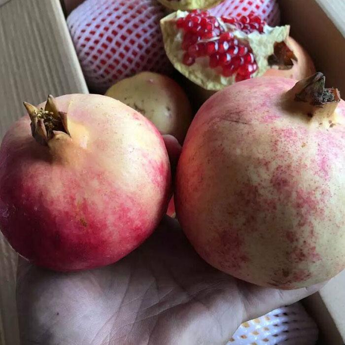 现货大石榴2个装新鲜大果孕妇水果顺丰包邮
