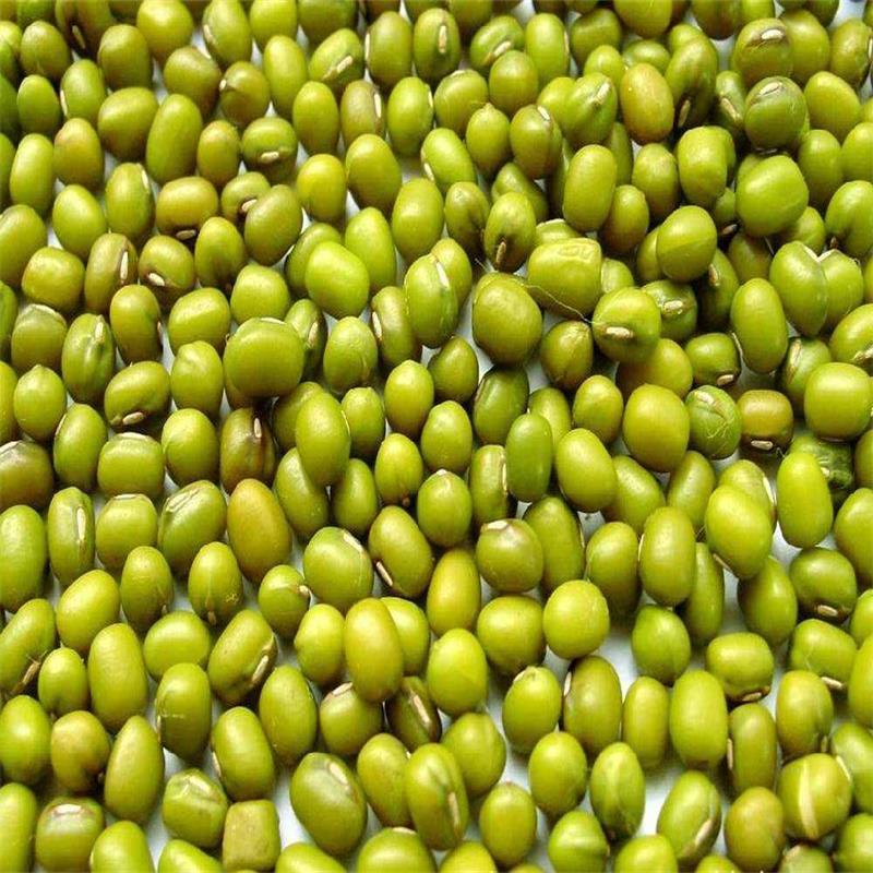 5斤2500g新鲜绿豆农家绿豆小绿豆芽豆明绿豆发豆芽煮汤散装包邮