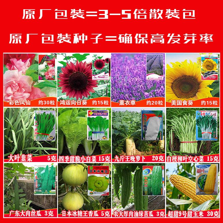菜种籽蔬菜种孑水果黄瓜薄荷玉米丝瓜南瓜蒲公英秋葵西瓜草莓种子
