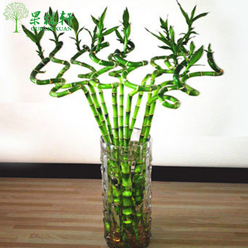 Buy Transport Bamboo Lucky Bamboo Home Desktop Hydroponic Indoor