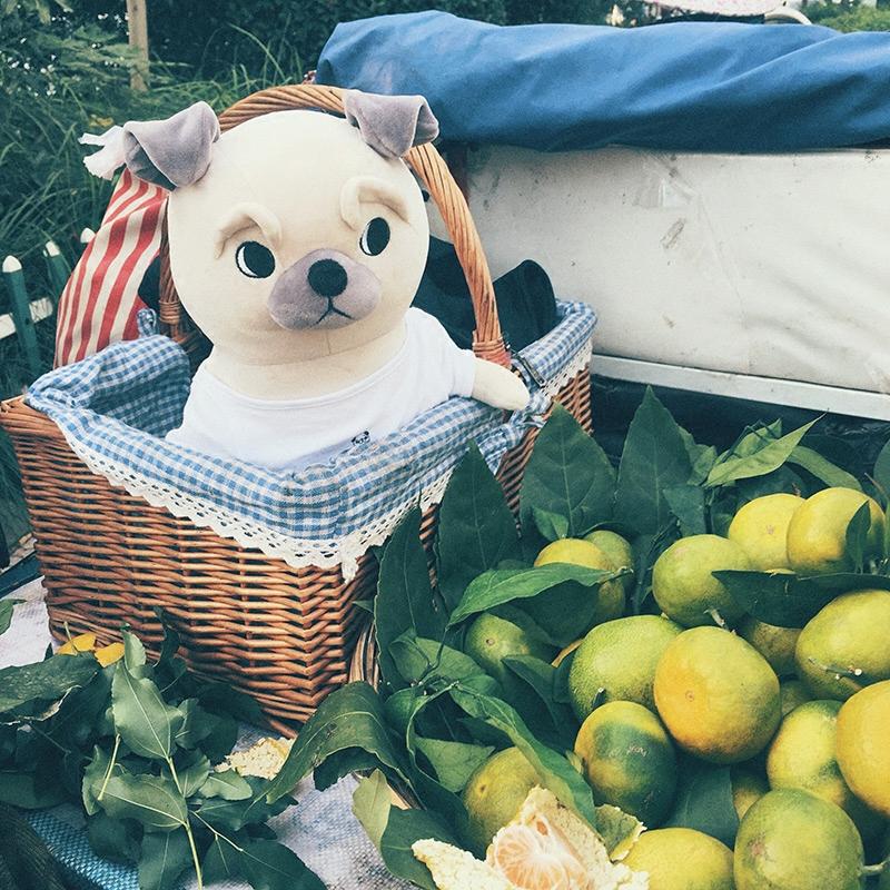 布偶娃娃女生礼物 毛绒玩具抱枕 小狗玩偶公仔 巴哥与法国斗牛犬