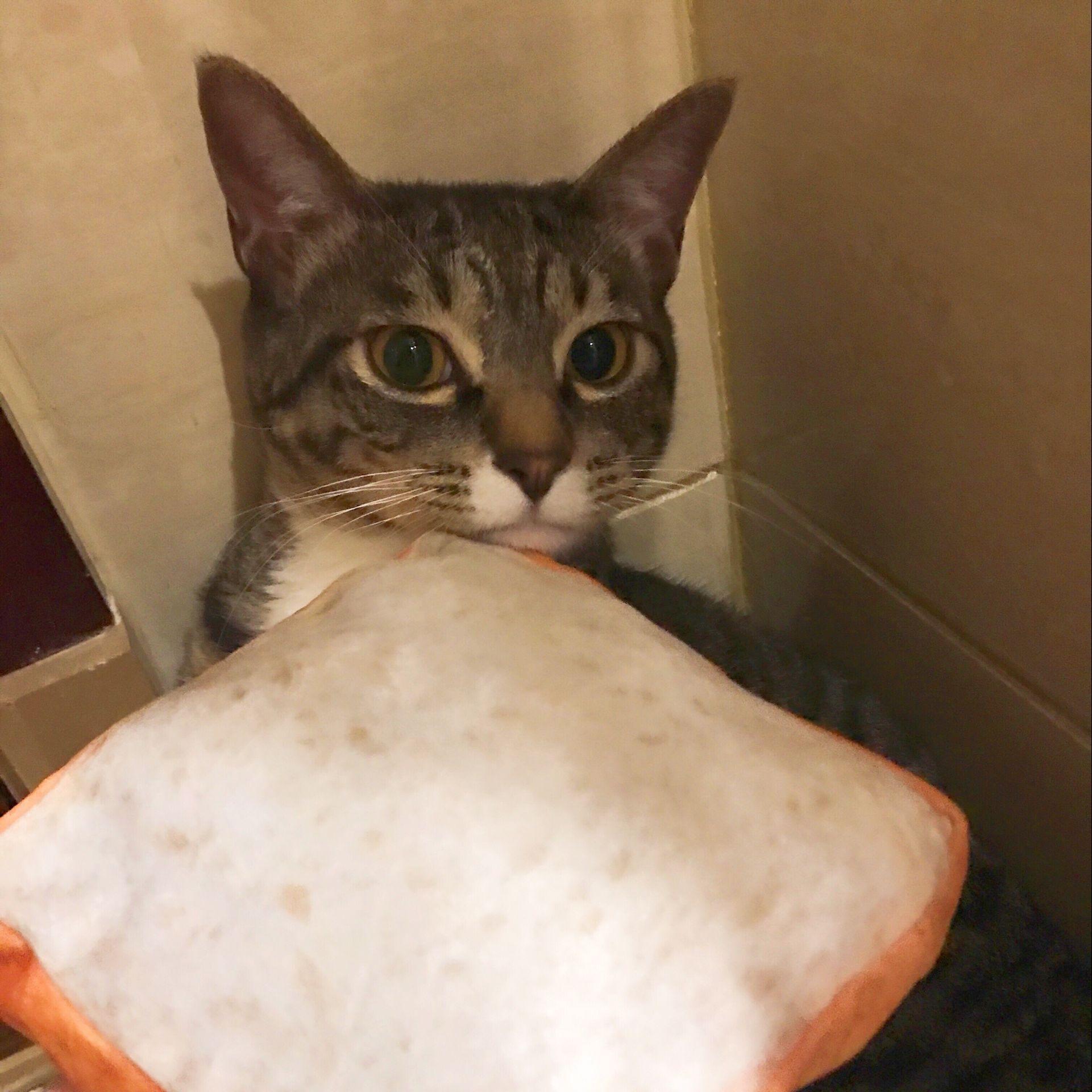 微博同款 吐司坐垫 仿真面包 土司宠物坐垫 猫咪榻榻米