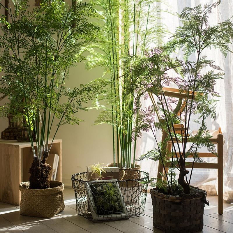 装饰摆件落地清新造景 仿真植物绿植花卉盆景树 氧气蕨树 掬涵