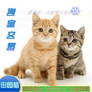 猫咪活物田园猫橘猫幼崽土猫家猫小猫活物橘猫白猫狸猫中华田园猫