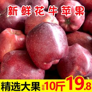 甘肃天水花牛苹果10斤精选大果苹果新鲜水果红蛇果粉面苹果平果