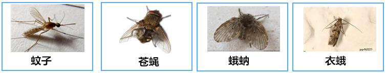 蟑螂,蚂蚁,臭虫,跳蚤,虱子,啮虫,飞蚁,白蛉,蠓虫,虻虫,尘螨,粉螨