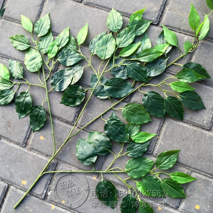 仿真树叶樟树叶手感过胶香樟树叶树枝 香樟叶假枝叶工程装饰树叶图片
