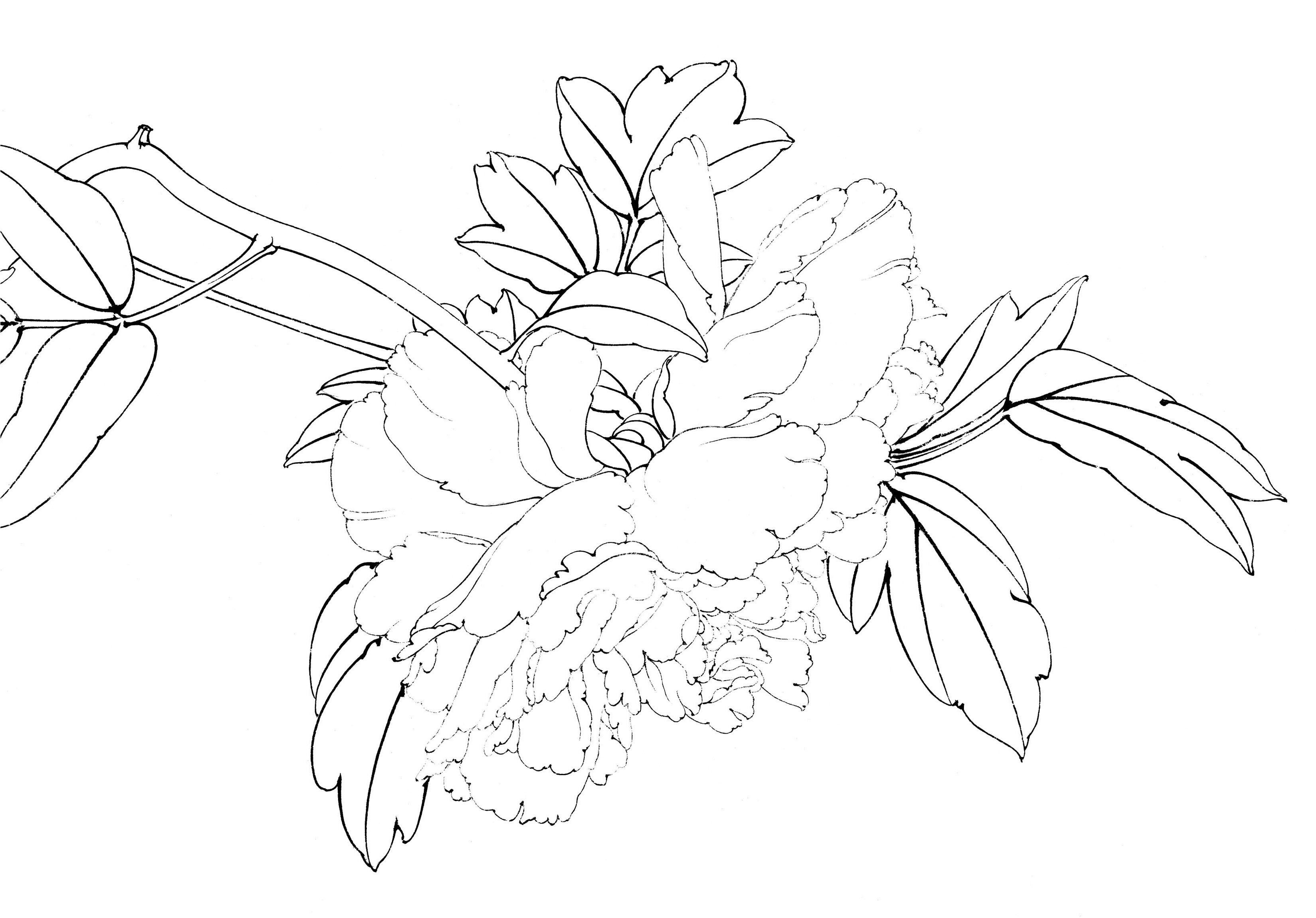 工笔白描底稿临摹练习初学入门国画水彩花鸟牡丹荷花勾线矾熟宣纸图片