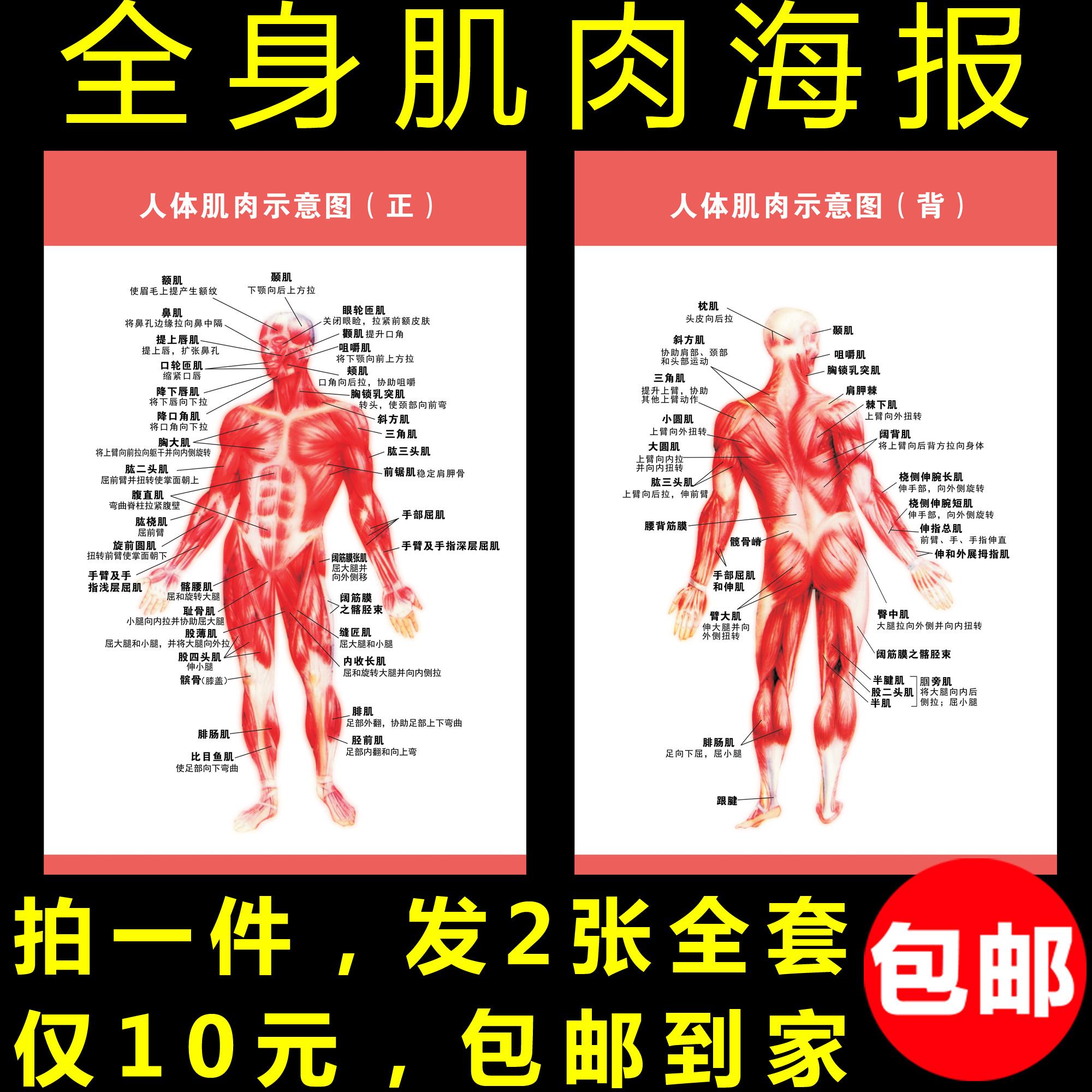 人体构成结构示意图_脊椎相关疾病的脊髓节段关系模式图示意图人体解剖图