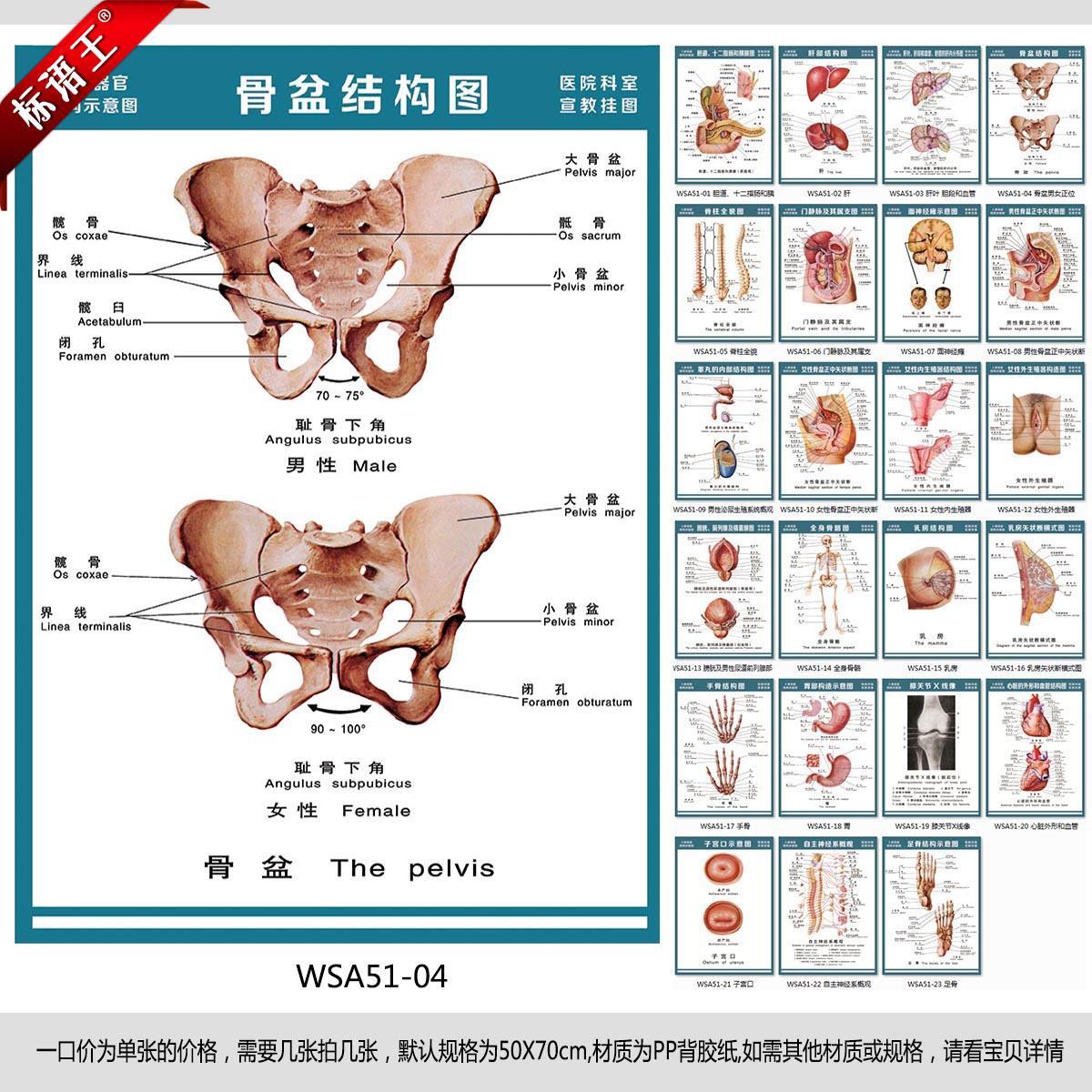 人体构成结构示意图_医院科室挂图解剖图人体肌肉骨骼神经示意图宣传画贴画wsa52-01