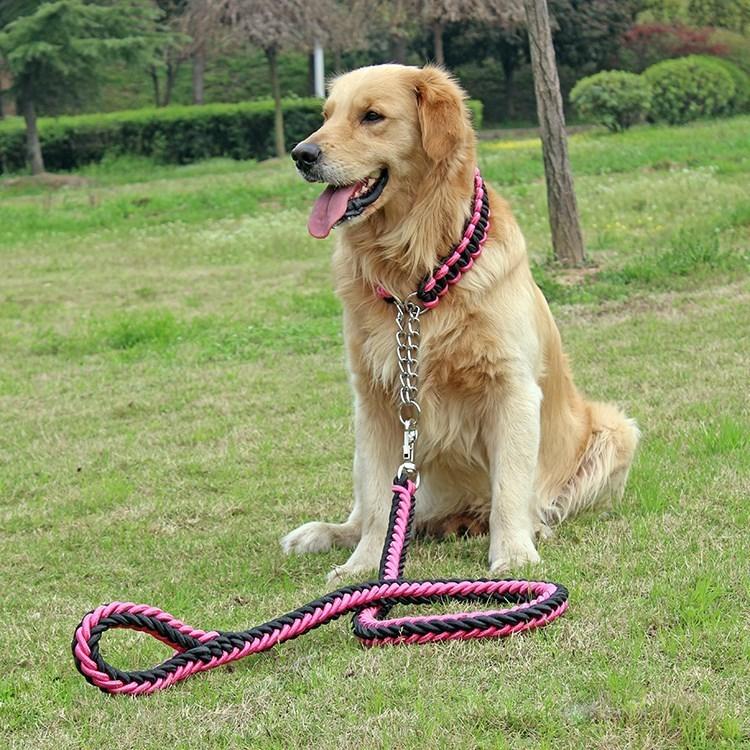 中型犬_中型金色短毛犬_短毛中型护卫犬哪个最好