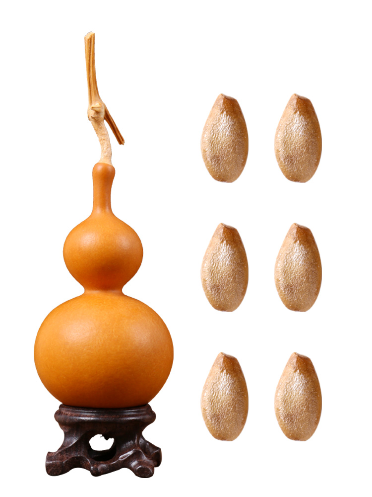 collectables - autograph gourd seeds, small mini hand twist in the waist seed garden set of big gourd seed giant