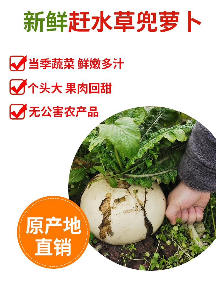 国家地理标识绿色食品 重庆特产 渝冬来 新鲜赶水草兜萝卜 4.5斤 天猫优惠券折后¥12.8包邮(¥27.8-15)