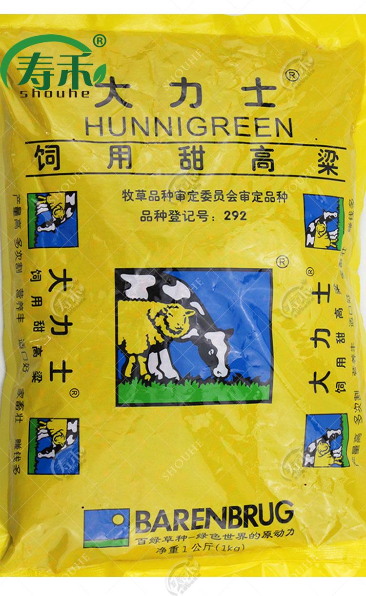 百绿 大力士甜高粱牧草种子 饲用高粱 大田种植高产南方北方种籽