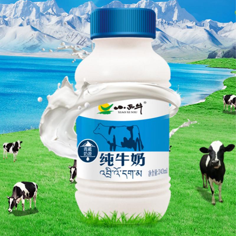 小西牛青海纯牛奶243ml*12