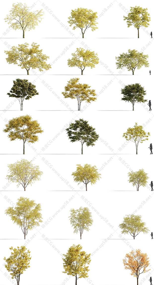 3DSMAX / VRay / Corona园林设计枫树银杏松柳悬铃木树木3D模型