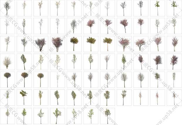 150棵春天树木PNG透明免扣背景平面设计高清素材库
