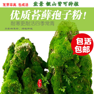 Moss plant seed water-absorbing stone rockery on water stone bonsai grass four seasons fresh moss seed moss spore powder