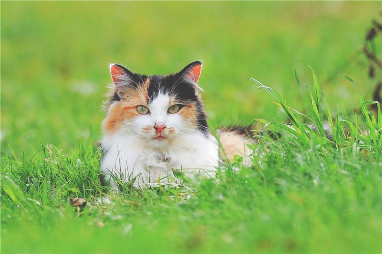 夏天猫咪生活的正确打开方式!