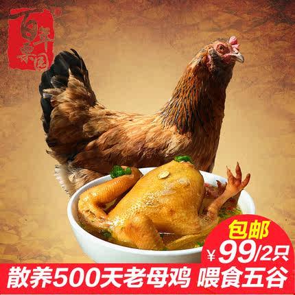 买一送一 百年栗园农家散养土鸡老母鸡1.25kg500天走地鸡