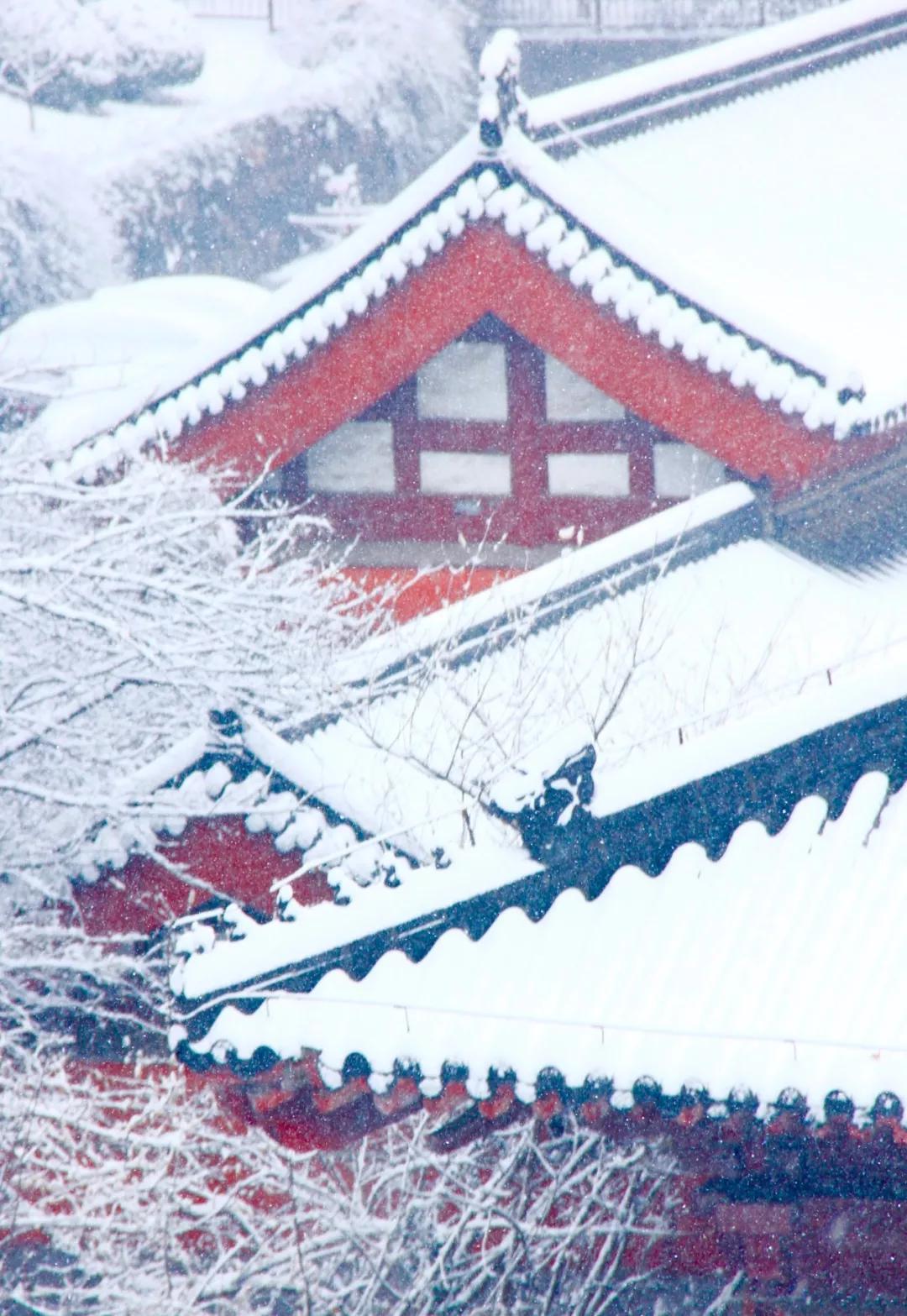 喜提2020第一场雪!雪后的江南美爆了31