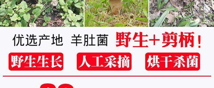 年新货剪柄羊肚菌干货特级云南深山野生羊肚菌蘑菇煲汤详细照片