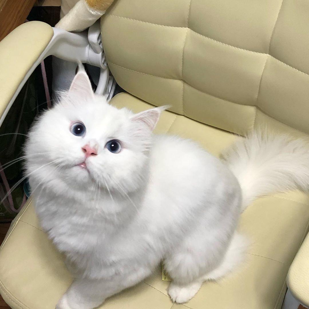 猫咪天天舔毛食欲不振怎么办